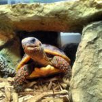 Come see the turtles at The Reptile Zone