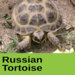 Russian Tortoise at The Reptile Zone in Bend Oregon