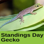 Standings Day Gecko at The Reptile Zone in Bend Oregon